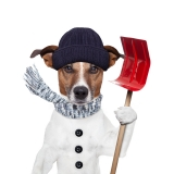Caring For Your Dog During Winter